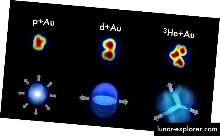 """Ако сблъсъци между малки снаряди - протони (p), дейтерони (d) и ядра на хелий-3 (3He) - и златни ядра (Au) създават миниатюрни горещи точки от кварково-глюонна плазма, схемата на частиците, взета от детектора трябва да запази някаква """"памет"""" на първоначалната форма на всеки снаряд. Измерванията от експеримента PHENIX съответстват на тези прогнози с много силни корелации между първоначалната геометрия и крайните модели на потока. (Хавиер Орджуела Куп, Университет на Колорадо, Боулдър)"""