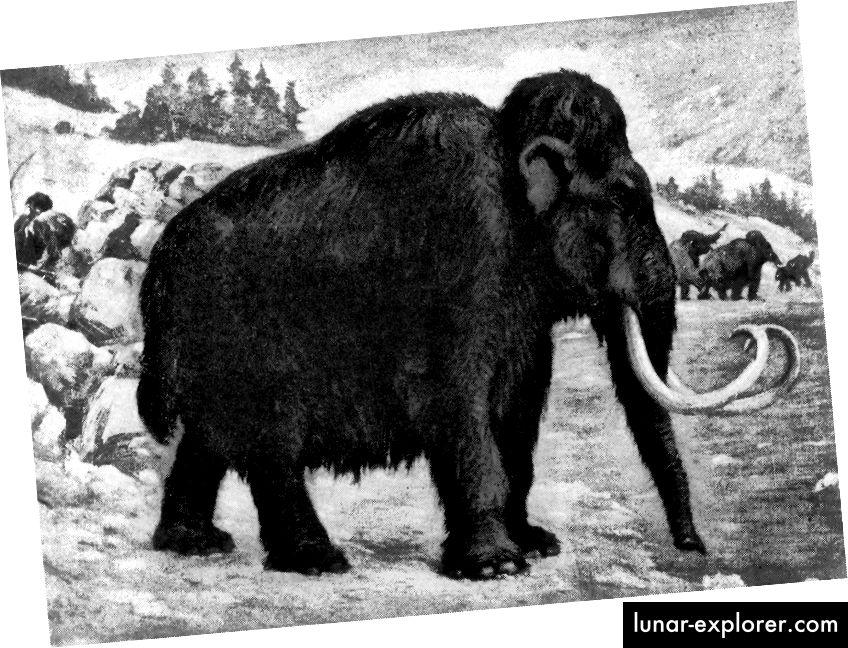 Životinje poput vunastog mamuta, koji je dominirao većim dijelom paleolitika, izumrle su krajem posljednjeg ledenjačkog razdoblja prije otprilike 10–12.000 godina. Otprilike 75% sjevernoameričke megafaune u ovom je trenutku nestalo. (CHARLES R. KNIGHT / 1915.)