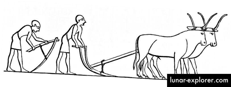 Ovaj crtež prikazuje drevni egipatski plug, koji su volovi povukli nakon pripitomljavanja, ali jasno predstoje izumu (ili primjeni) kotača. Plug je bio prvi veliki tehnološki razvoj u ljudskoj civilizaciji (u svrhu produktivnosti), koliko možemo reći (POPULARNA ZNANOST MJESEC, VOL. 18, 1880/1881.)