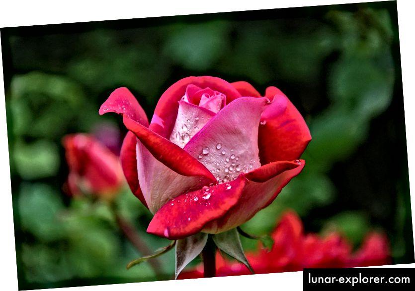 Fotografije sa pretilošću su zaista sramotne, pa evo i lijepog cvijeta