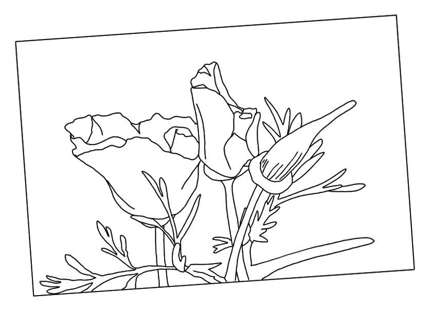 Semua fokus ada di bunga-bunga, tetapi ingin sedikit konteks.