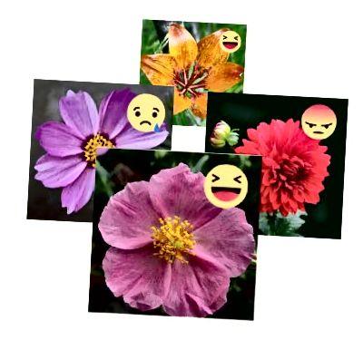 Označenie vstupných obrázkov emóciami