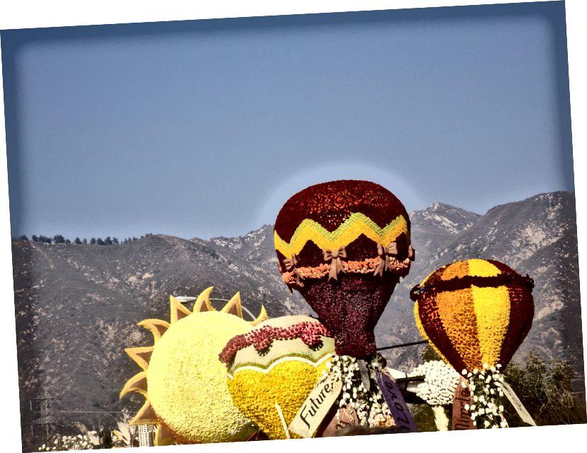 Růže balónky: reprezentativní polo art.