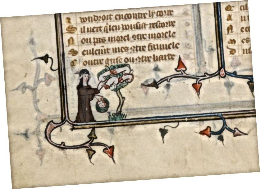 «Nun Harvesting Phalluses from Phallus Tree, Monk and Nun Embracing», - ասում է Ժաննա դե Մոնտբաստոնը: Via gallica.bnf.fr- ով
