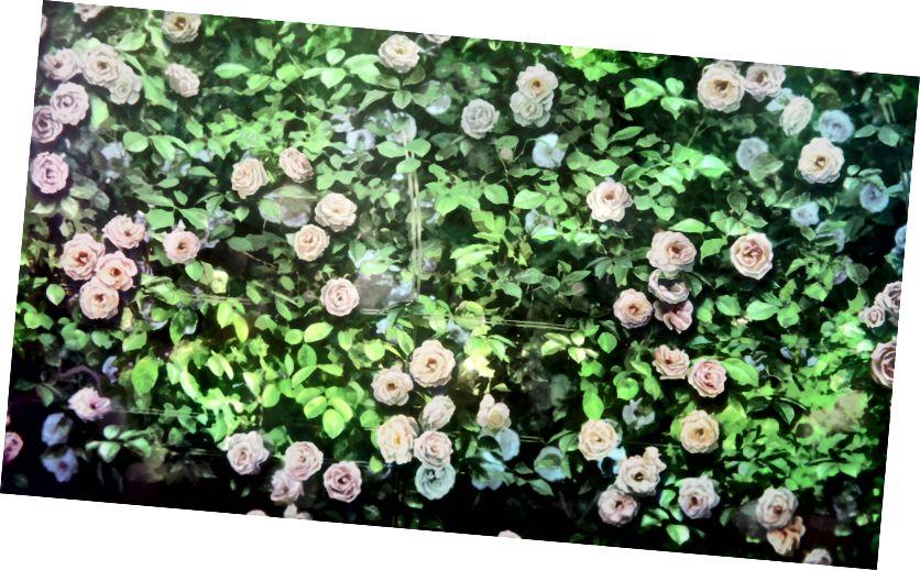 «Թամակոյի սիրային պատմությունից վարդերի հանգստացնող կազմը», Աղբյուր ՝ Tamako Love Story