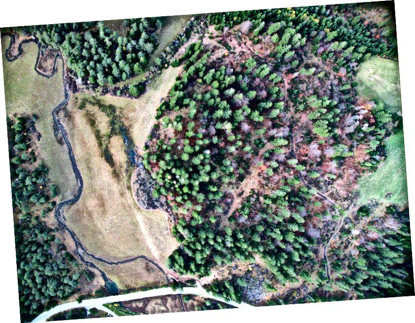 Hutan murni dataran tinggi Bloke, Slovenia. Mengambil gambar dengan Canon A810 pada layang-layang Rokkaku.