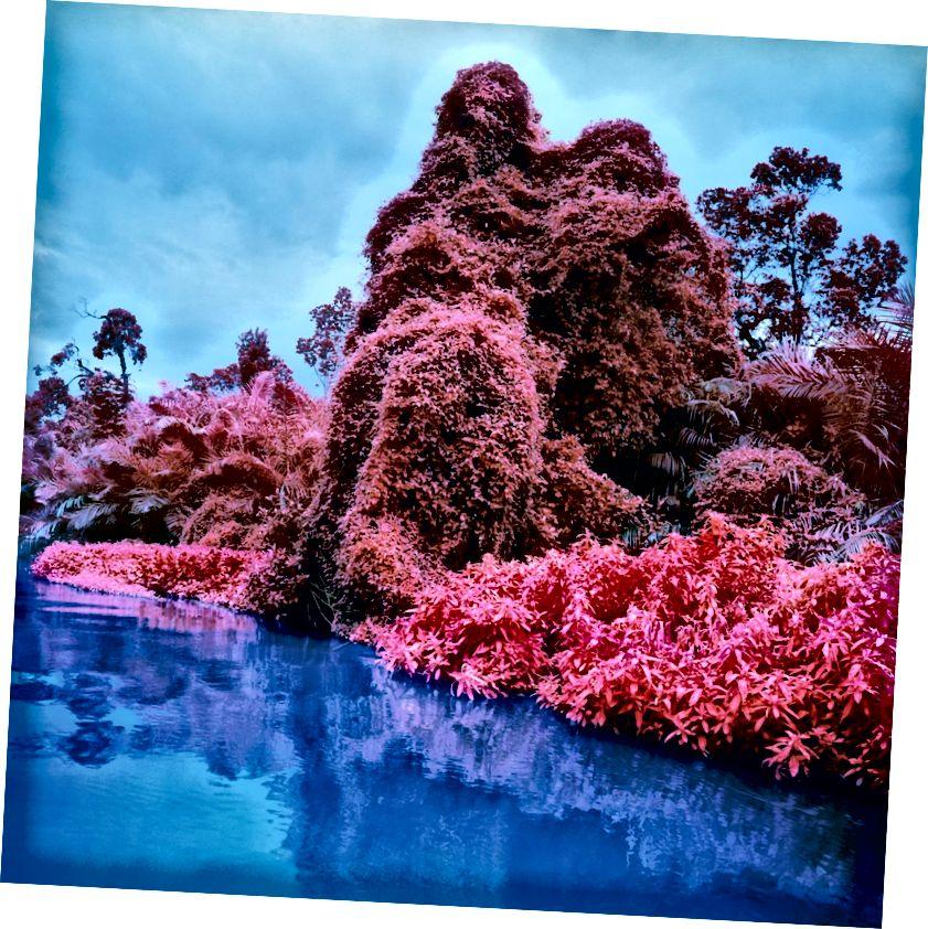 Ռիչարդ Մոսե | Invasive Exotics, 2012. Թվային c-print. © Richard Mosse. Նյու Յորքի արվեստագետի և Shեք Շայնման պատկերասրահի բարեսիրտությամբ: