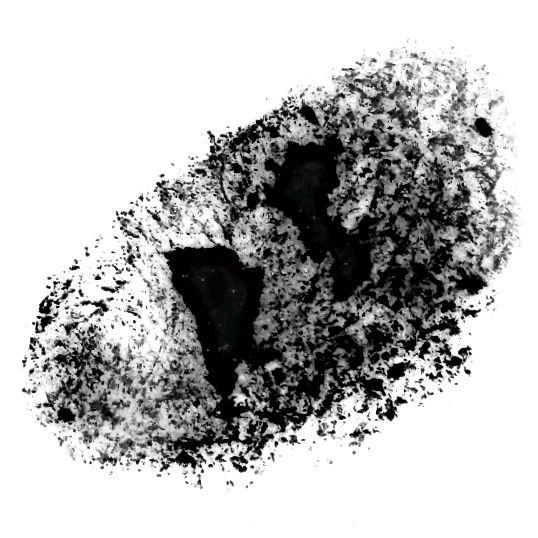 Finální olejové pastelové razítko. Jste rádi, když si stáhnete tento obrázek a použijete jej k vytvoření stopy v koncepcích.