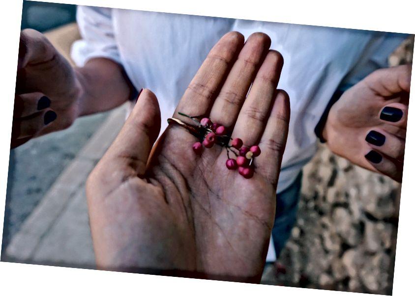 Нахождение вишни на улице | L'weibdeh, Амман