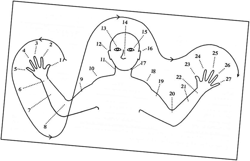Papua Yeni Qvineyadakı Oksapmin xalqından bir orqan sayma sistemi. [Təsvir təsviri: barmaqları, bilək, qol, dirsək, çiyin, boyun, qulaq, göz, burun və s daxil olmaqla 27 nöqtədən ibarət rəqəmlərlə yuxarı bir cədvəlin eskizi]
