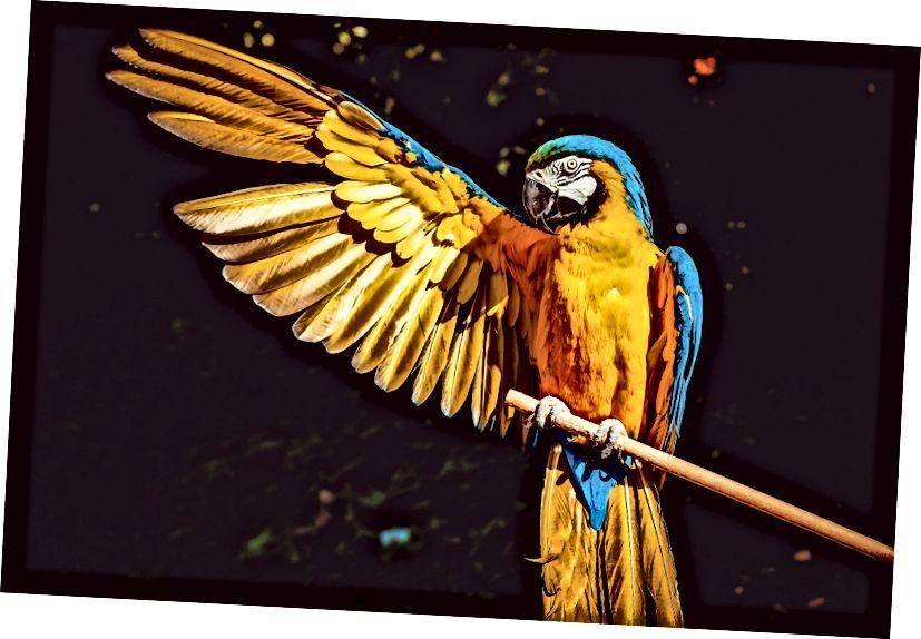 Obrázek z Pixabay. Myslím, že tento papoušek zdraví Žlutou iniciativu pro náš boj proti obchodování s lidmi.