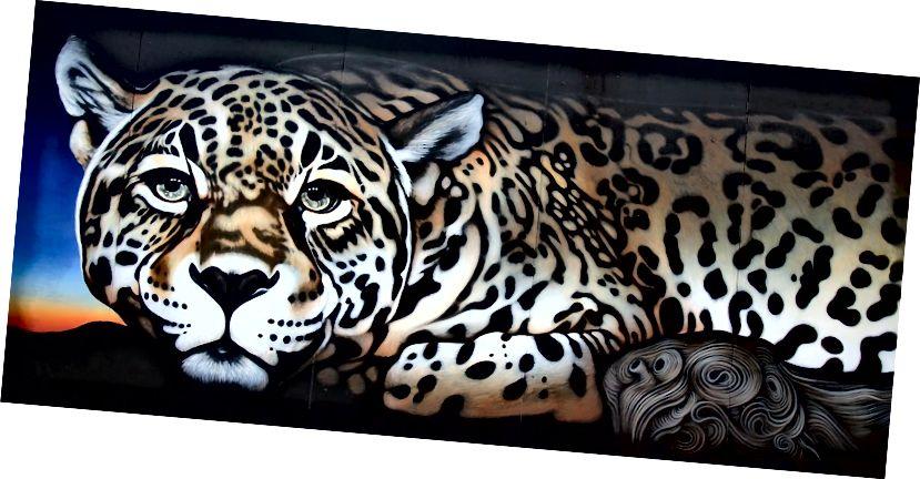 Роспись ягуара в Тусоне, штат Аризона, автор Кати Астрайр.