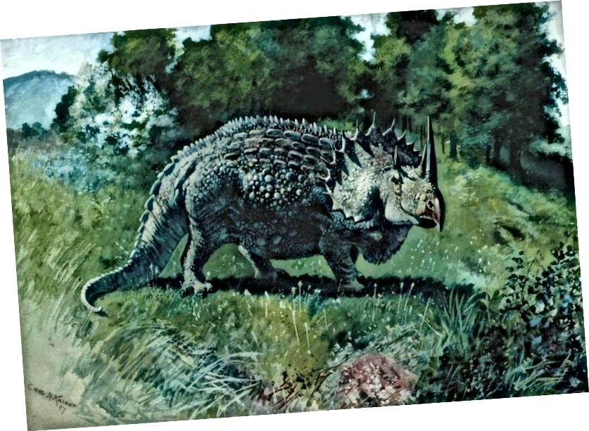 Agathaumas sphenocerus - צ'ארלס ר. נייט, 1897
