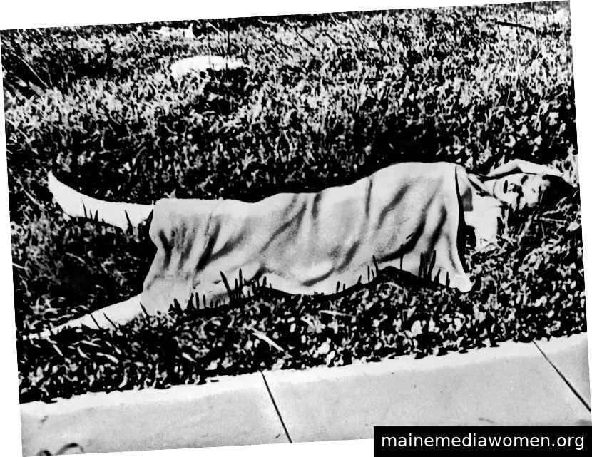 Shorts Leiche, die von Ermittlern am Tatort erfasst wird.