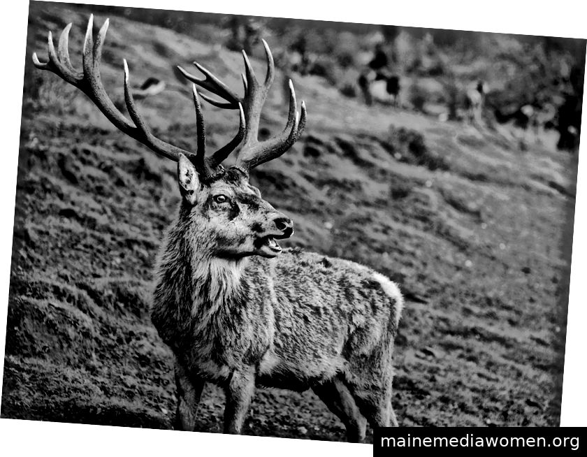 Ein Hirsch in Schwarzweiß. Bristol. 2019.