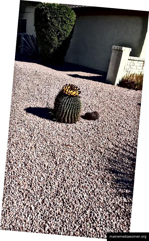 Persönliches Foto - Arizona