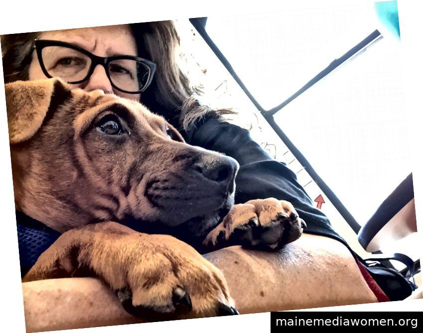 Freiwilligenarbeit mit Rettungshunden für Bideawee