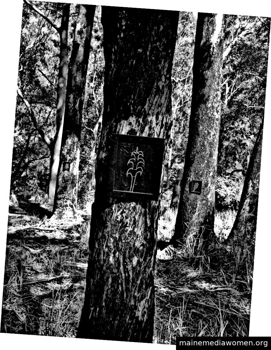 Gerry Joe Weise, schwarze Gummibäume, Land Art Australia, 2016.