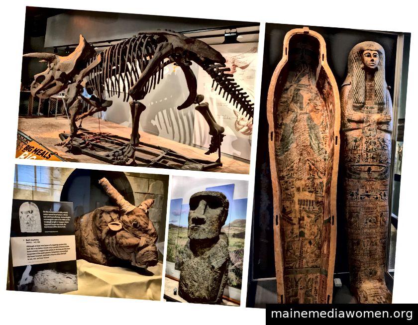 Das Naturkundemuseum (von oben links): Ein Triceratops, ein Sarkophag, eine Steinfigur von der Osterinsel und eine heilige Stiermumie aus dem alten Ägypten