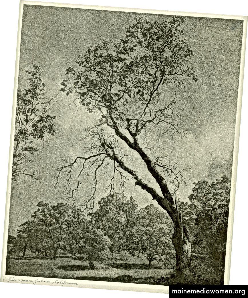 """Tree - near Julian California """", ein klassisches Bild und ein wunderschöner Pigmentdruck von William Mortensen"""