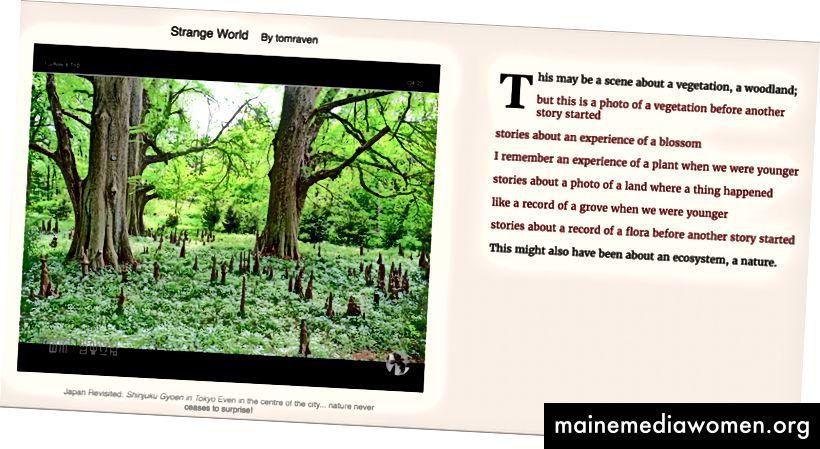 Verwenden von Amazon Rekognition (rot) und Google Vision API (schwarzer Text) aus einem flickr-Bild mit einer Grammatik von tracery.js.