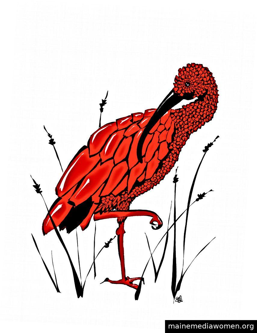 Scharlachroter Ibis, von Erica Christensen.