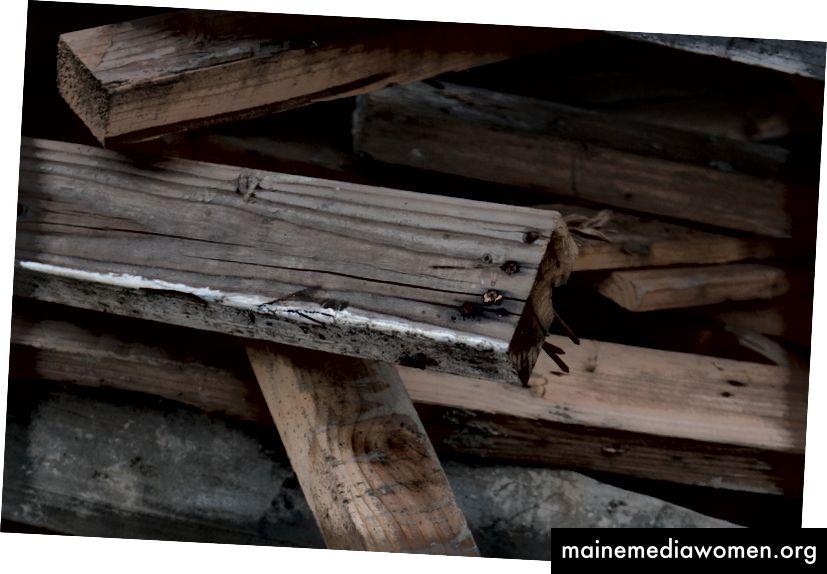 Erstes Bild von Nikon D850, Detail, RAW.