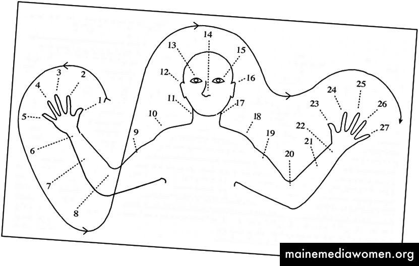 نظام عد الجسم من شعب أوكسابمين في بابوا غينيا الجديدة. [وصف الصورة: رسم من الجزء العلوي من الجسم مع أرقام تشير إلى 27 نقطة ، بما في ذلك الأصابع والمعصم والذراع والكوع والكتف والرقبة والأذن والعينين والأنف ، وما إلى ذلك]