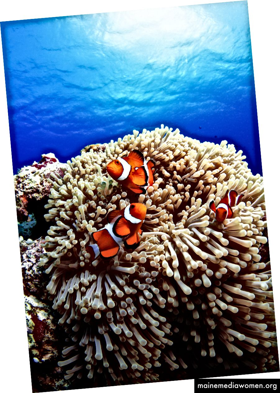 Möglicherweise das schönste Foto von Fischen, das jemals aufgenommen wurde. Bildnachweis: Lotus41 / Moment / Getty Images