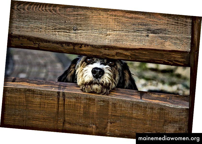 السور الكلب غير مرئية حول إبداعك