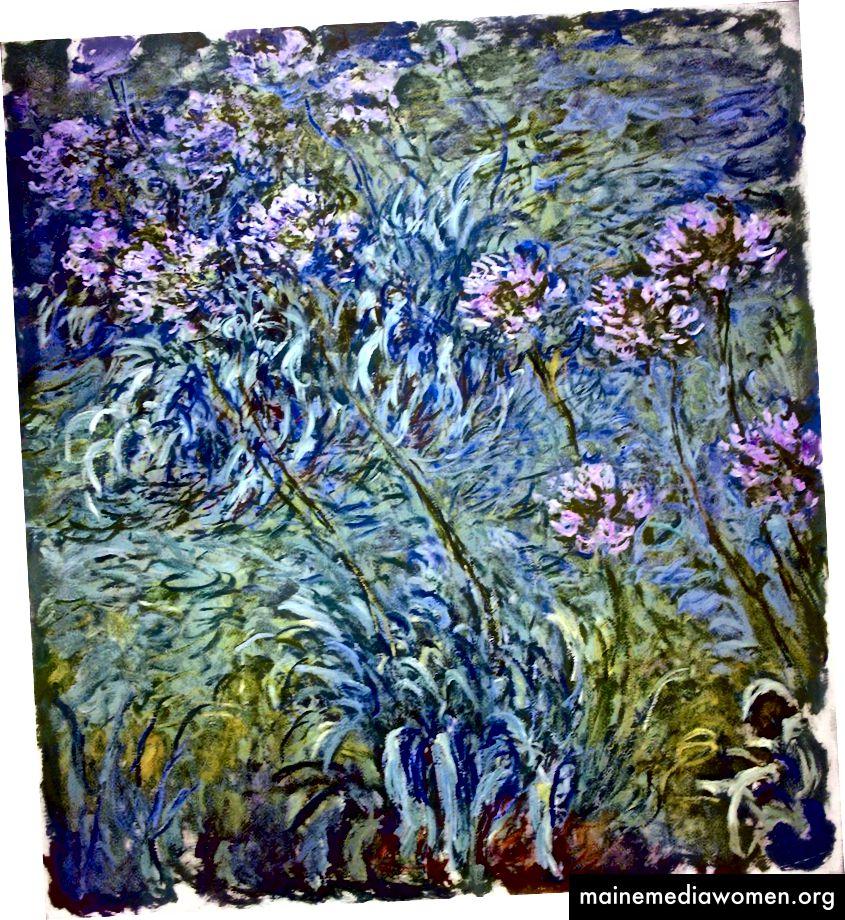 Agapanthus, Monet