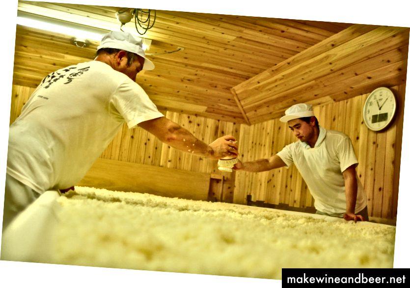 دو کورابیتو (کارگران آبجوسازی) برنج را با اسپورهای کوجی تلقیح می کنند تا در موزه کوجی کنترل شده با دما از نانوایی