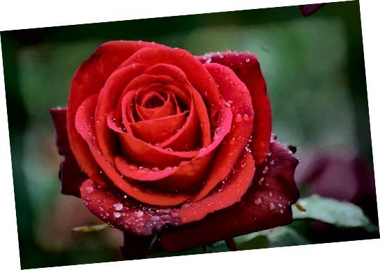 Můžete si také vyrobit květinové bomby do koupele, jako růže.
