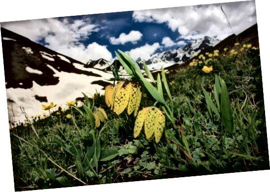 Gigawhite jest formułowany z 7 roślin alpejskich