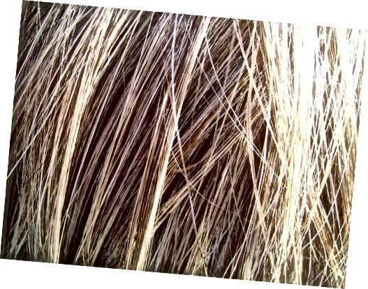 اگر می خواهید موهای بلوند آن را رنگ کنید مو باید در وضعیت خوبی باشد.