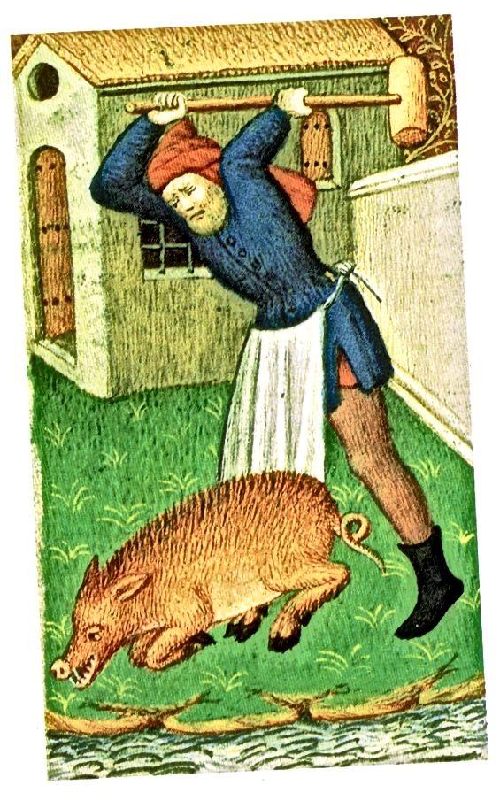 مرد قرون وسطایی یک خوک را می کشد - و می پوشد و پیش بند