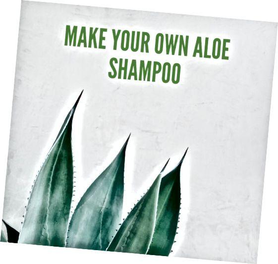 Ալոե խորը մաքրում է մազերն ու գլխամաշկը: Իմացեք, թե ինչպես պատրաստել ձեր սեփականը մազերը առողջ պահելու համար: