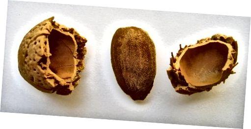 Dầu hạnh nhân là một chất làm mềm da phong phú lý tưởng cho da khô.