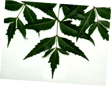 Antibakteriální neem.
