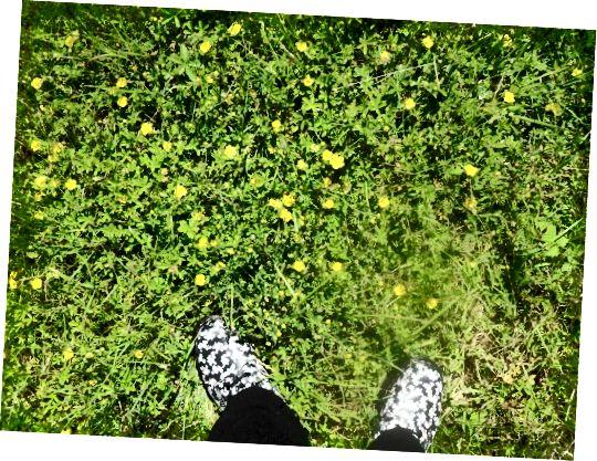 मेरे फूलों डॉक्स अंग्रेजी ग्रामीण इलाकों चुंबन।