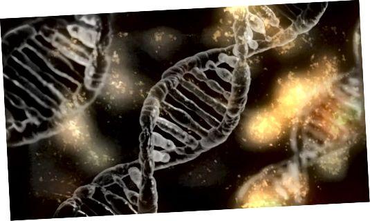 Nedávné studie ukázaly, že parabeny mohou poškodit lidskou DNA.