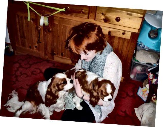 मेंहदी उपचार के एक दिन बाद मेरे बाल। जैसा कि आप देख सकते हैं, यह एक गहरा, गहरा छाया एक लाल हो गया। मेरे बाल मूल रूप से मेरे कुत्तों पर अदरक के पैच की तुलना में हल्के थे।