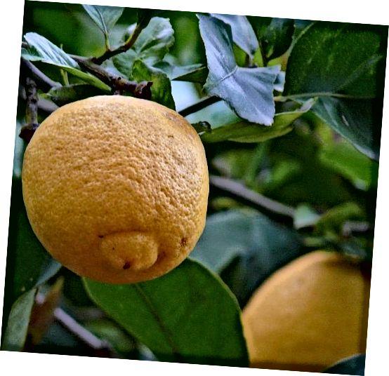 MMMM ..... Citrony!