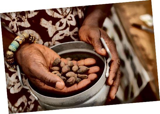 Արեւմտյան Աֆրիկայի շեյն ընկույզները օգտագործվում են իրենց անունները կարագ պատրաստելու համար, ինչը կարող է օգնել մեղմացնել մաշկը, խթանել կոլագենի արտադրությունը և օգնել հյուսվածքների բջիջների վերականգնմանը: