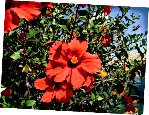 வேலைநிறுத்தம் செய்யும் ஒளி வண்ண மலர்கள் கொண்ட ஒரு செடி வண்ணம்