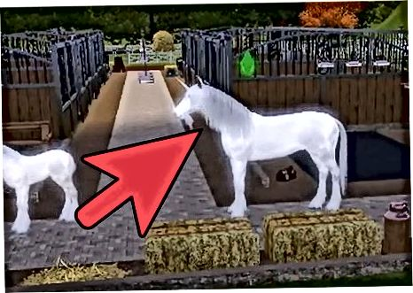 Unicornni qabul qilish