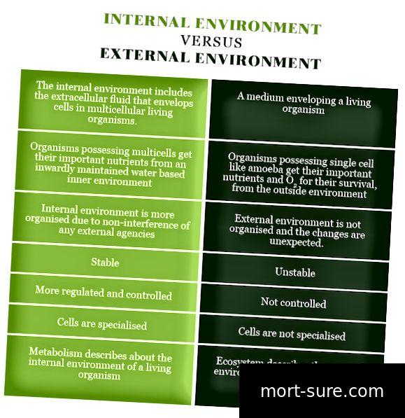 Вътрешна среда VERSUS Външна среда