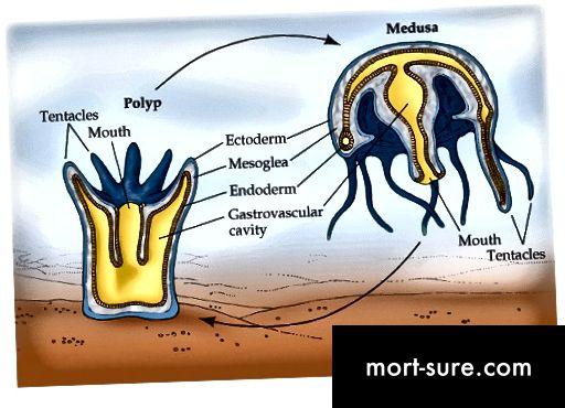 الفرق بين الورم وميدوسا