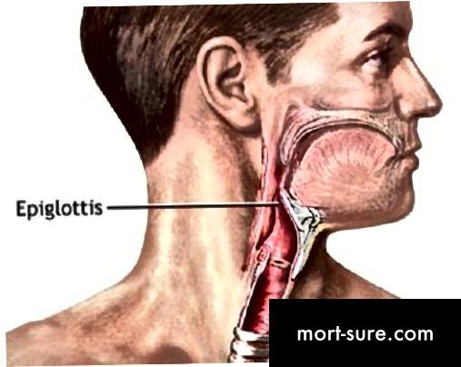 Erinevus uvula ja epiglotti-1 vahel