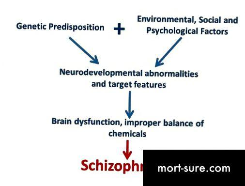 Η διαφορά μεταξύ άγχους και σχιζοφρένειας-1
